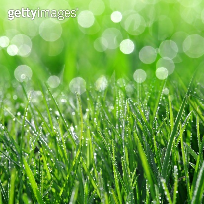 컬러시리즈 6 - Green