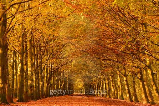 가을로 물든 오솔길