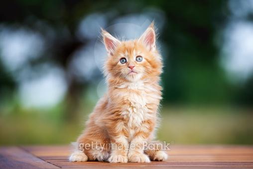 귀여운 동물 친구