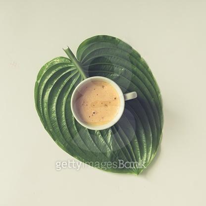 커피의 계절