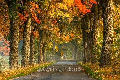 가을 모음