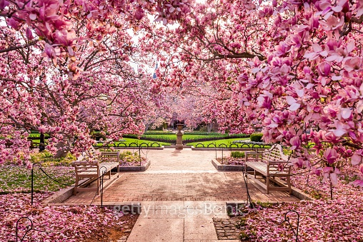 봄이여 오라