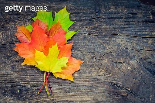 가을 단풍잎