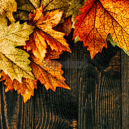 background with leaves