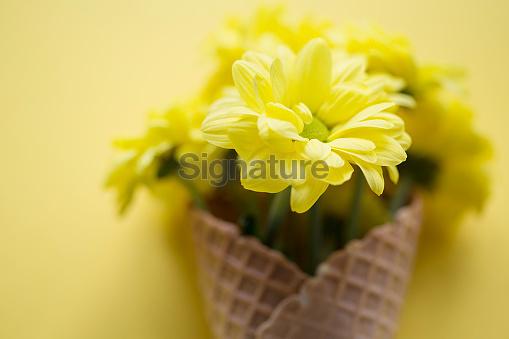 flowers and ice cream cone