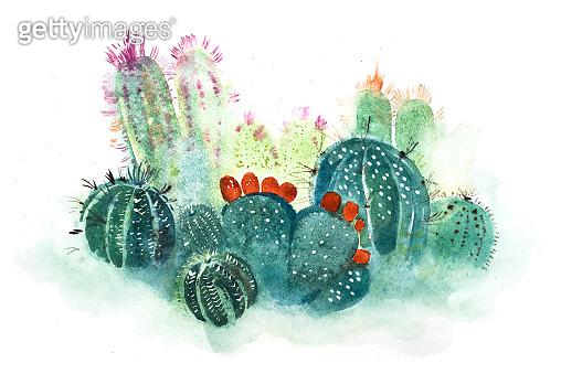 Cactus watercolor illustration