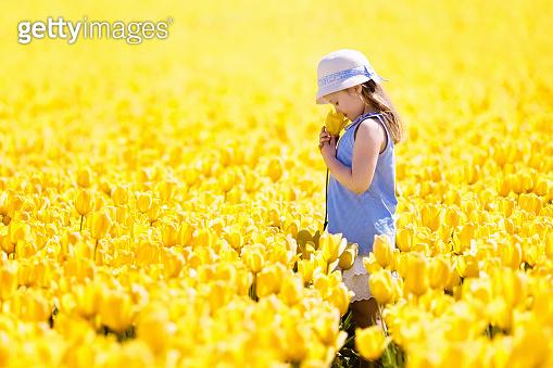 tulip & picnic