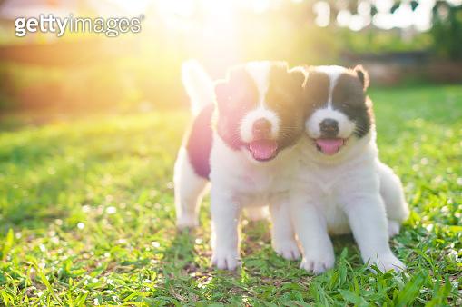 강아지 키우고싶어요