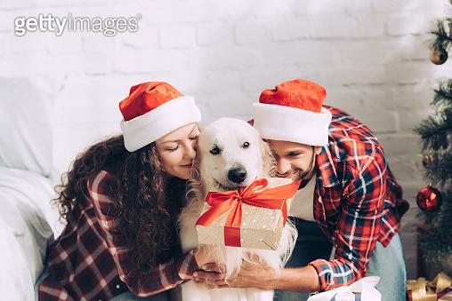댕댕이와 함께하는 크리스마스