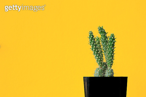 cactus on colourful background