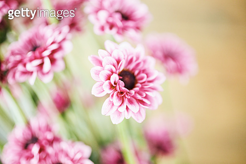 mixed Pink flowers