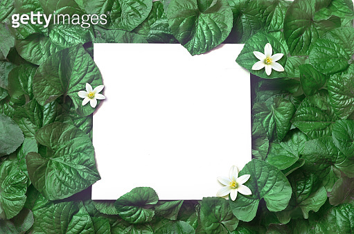 leaves with paper card note
