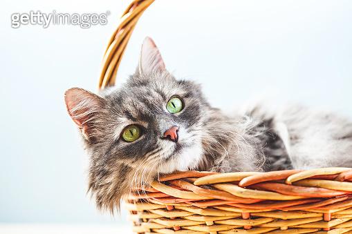 고양이의 하루