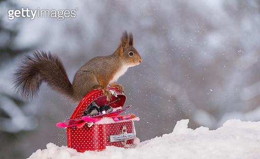 겨울을 즐기는 청설모