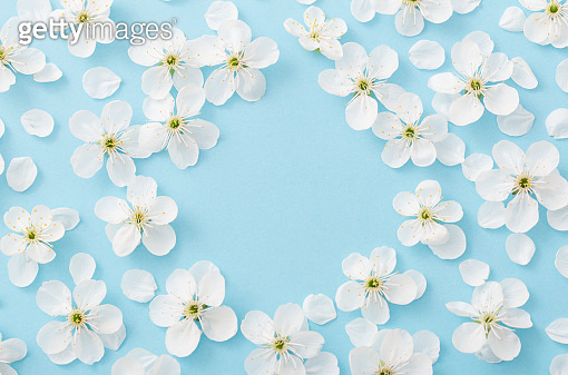 Cherry flowers on paper