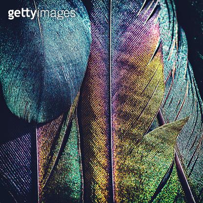 beautiful bird feather