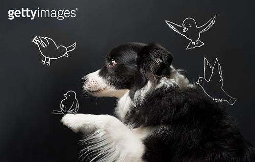 Dog and blackboard