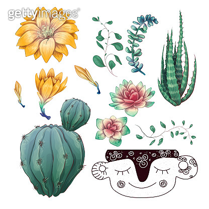 Potted cacti and succulents plants