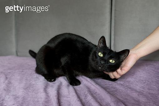 검은고양이