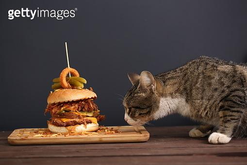 It is my dinner!