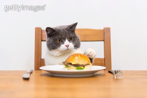 햄버거 맛있냥