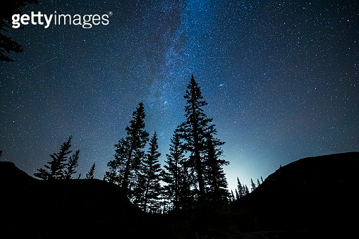 forests under starry sky,Alberta