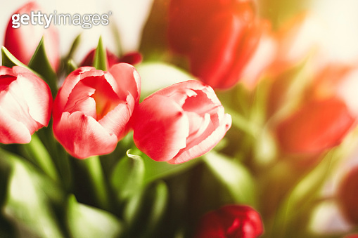 Brighten up your day with flowers