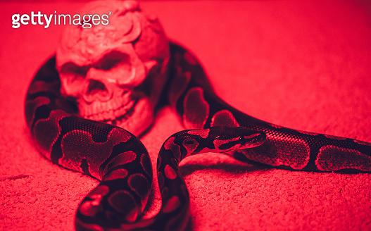 Snake and human skull