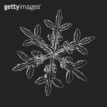 Real snowflake isolated