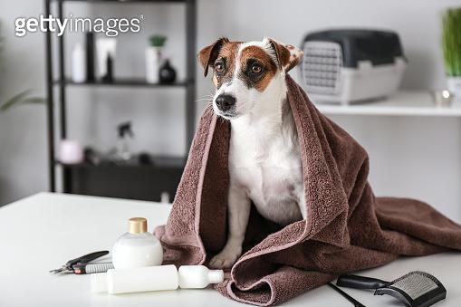 Dog care in salon