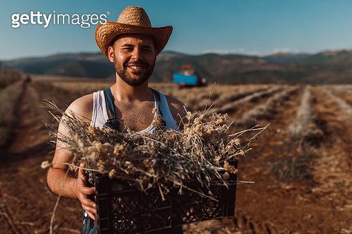 수확의 즐거움