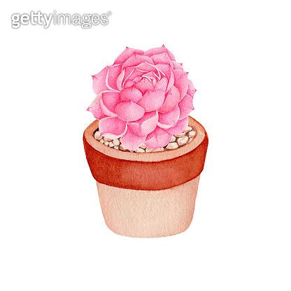 Watercolor illustration - plant