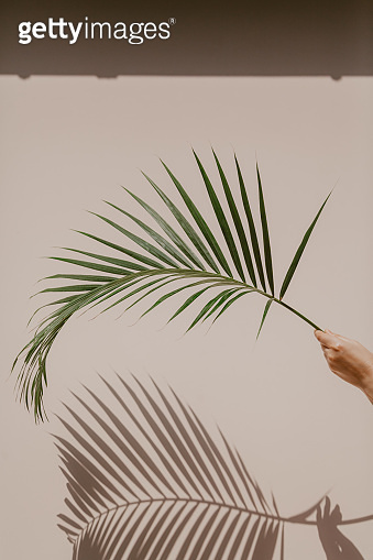 Palm branch in hand