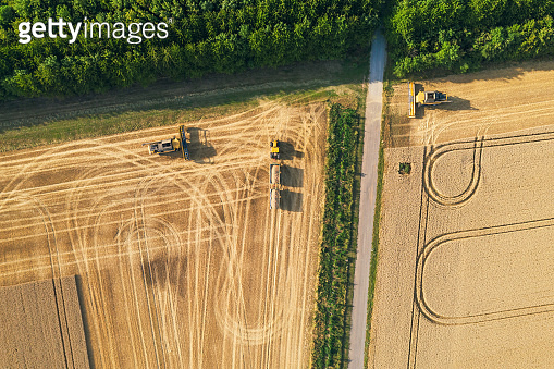 harvests wheat on a field