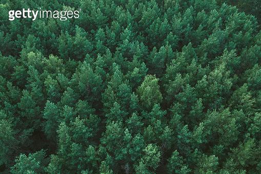 숲, 탑뷰, 백그라운드