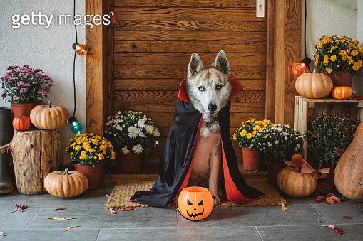 Halloween ghost dog