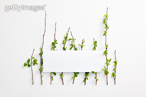 Eco concept with green leaves