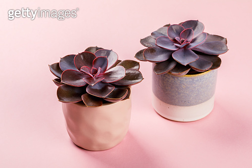Plant on bright color background