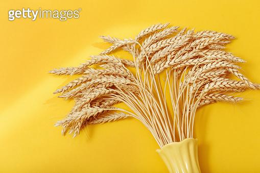 Wheat in white vase