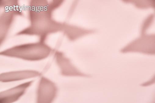 나뭇잎 그림자