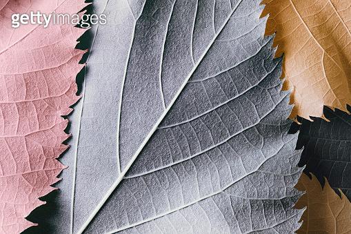 가을 컬러 낙엽 백그라운드