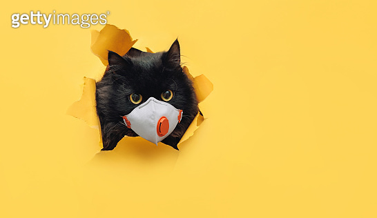Cat in yellow background