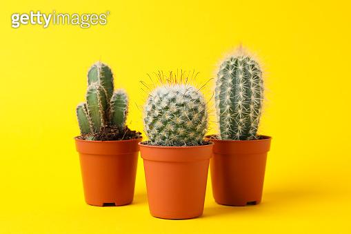 Cacti on yellow background
