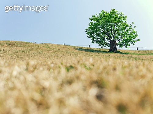 나무가 있는 풍경
