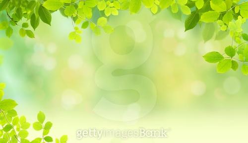 나뭇잎 백그라운드