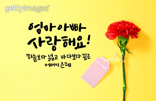카네이션+캘리그라피