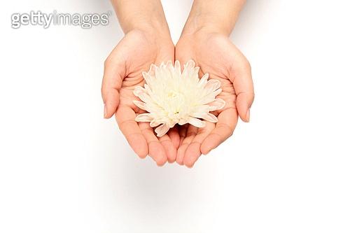 꽃으로 전하다