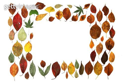 알록달록 낙엽