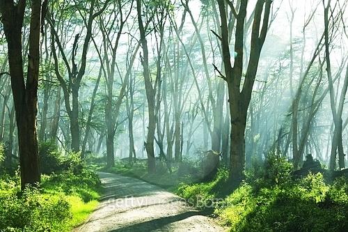 햇살담은 숲