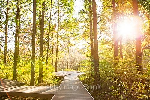 숲속 글램핑